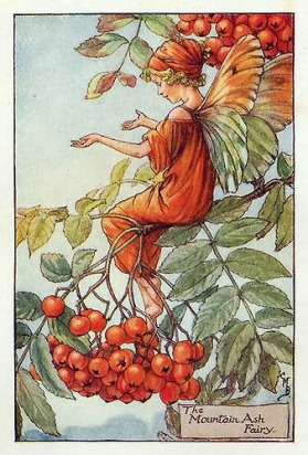 The Mountain Ash Fairy - Cicely Mary Barker, 1926