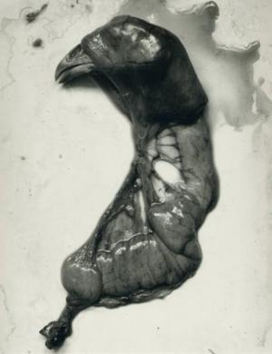 Chicken Parts - Frederick Sommer, 1939