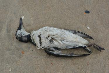Seagull - Ben Kerckx, 2014