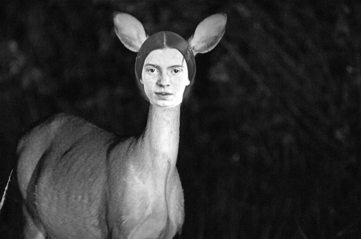a deer with the head of emily dickinson poetry by cassandra de