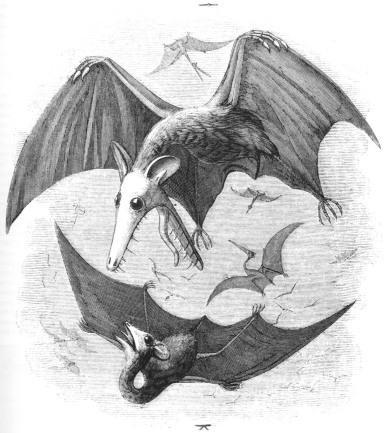 Pterodactyl Reconstruction - Edward Newman, 1843
