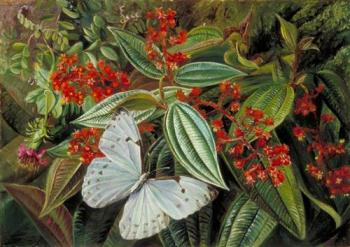 Trees Laden with Parasites and Epiphytes in a Brazilian Garden - Marianne North, 1873