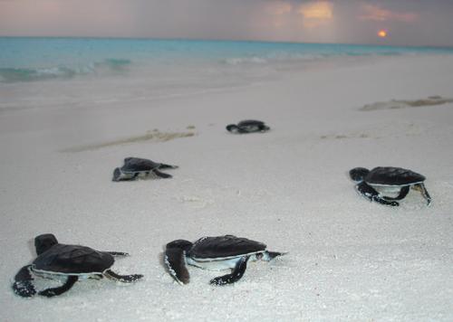 essay on sea turtle