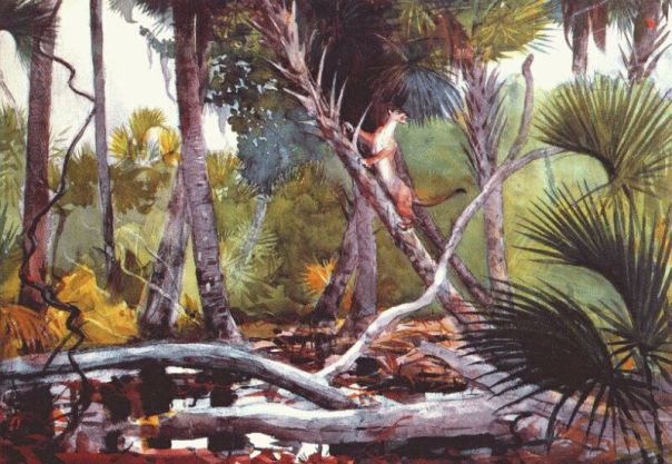 In the jungle, Florida - Winslow Homer, 1904