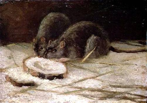 Two Rats - Vincent van Gogh, 1884