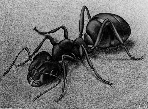 Ant - M.C. Escher, 1943